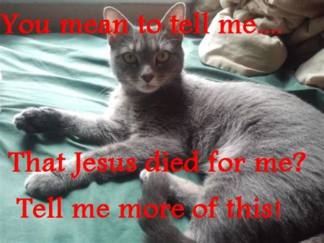 Jesus Cat Meme - image gallery jesus cat meme