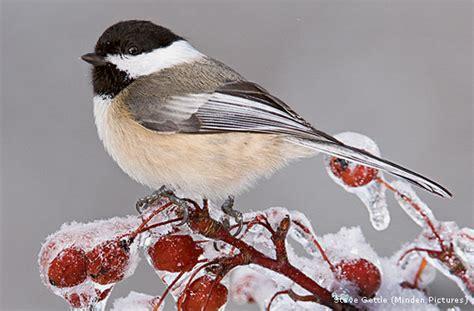 birds weather winter