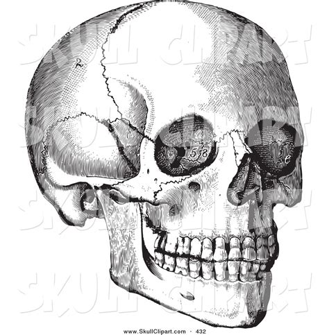 Royalty Free Anatomy Stock Skull Designs