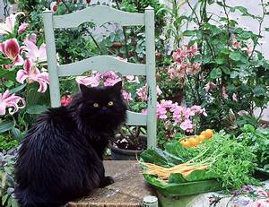 Plants Toxic to Cats Slideshow
