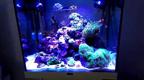 Juwel Lido Nano Reef Tank New Coral Frags No Skimmer Youtube