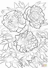Peony Coloring Pages Flower Moutan Tree Printable Flowers Drawing Print Paper sketch template
