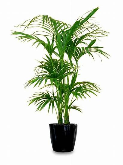 Plants Indoor Tall Plant Low Outdoor Houseplants