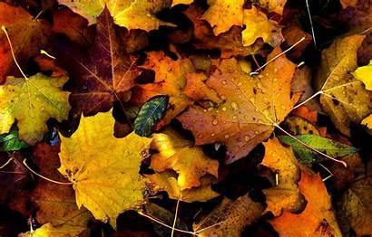Foliage Drops Autumn Fall вконтакте Telegram