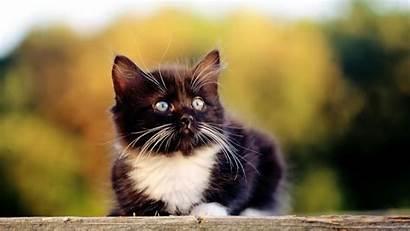 Animals Wallpapers Cool Desktop Kitten Windows Wallpapertag