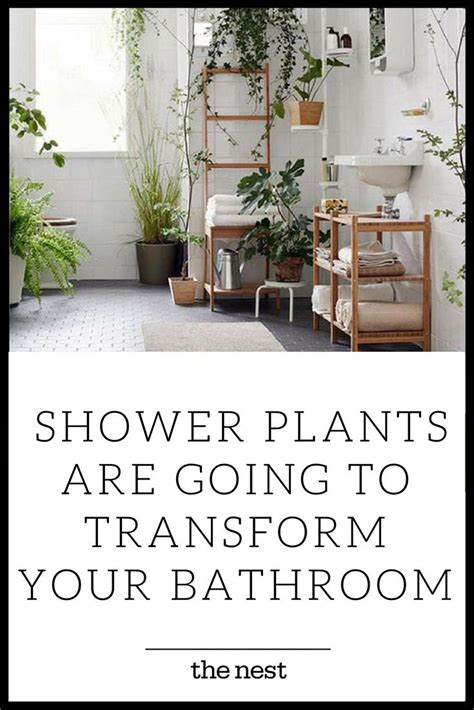 plants for bathroom without windows best 20 plants in the rainforest ideas on