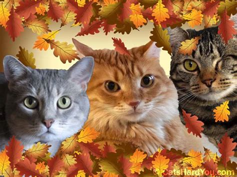 thanksgiving cat happy thanksgiving wallpapers with cats pictures to pin on pinterest pinsdaddy