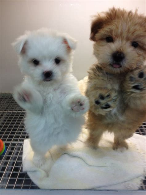 Best 25 Too Cute Puppies Ideas On Pinterest Cute Baby