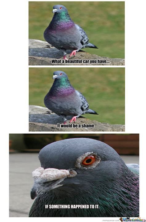 Pigeon Memes - scumbag pigeon by recyclebin meme center