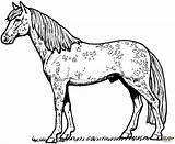 Coloring Horse Appaloosa Pages Printable Drawing Through sketch template