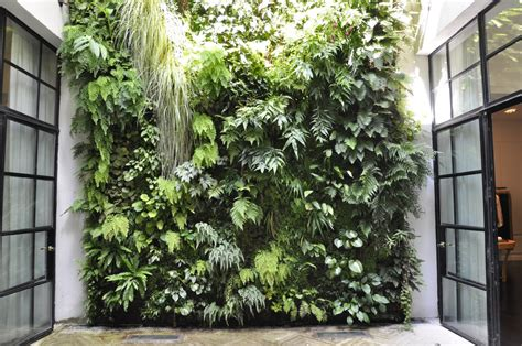 cat house indoor green wall thinking outside the boxwood