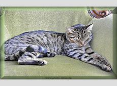 Katzenbilder kostenloses Bild von Katze schlafend im