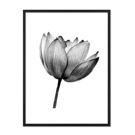 Schwarz Weiß Kontrast Bilder by Design Poster Mit Bilderrahmen Schwarz Lotus 30x40 Cm