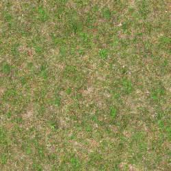Grass Seamless Ground Texture