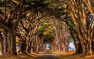 Landscape, Nature, Trees, Tunnel, Road, Daylight, Dry