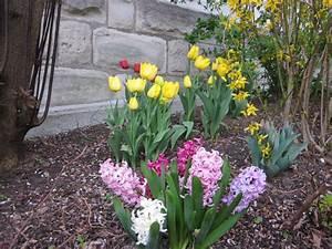 Tulpen Im Garten : die richtigen fr hjahrsbl her f r ihren garten native ~ A.2002-acura-tl-radio.info Haus und Dekorationen