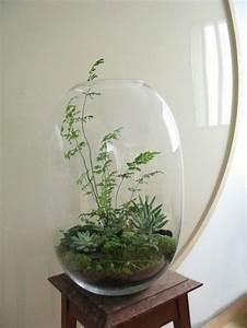 Grand Bocal Verre : le terrarium de printemps un morceau de nature la maison ~ Premium-room.com Idées de Décoration