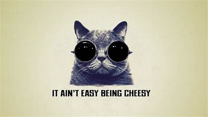 Cat Cool Cheesy Being Easy Wallpapers Background