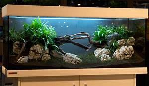 Aquarium Einrichten Beispiele : aquascaping tipps von oliver knott wie richte ich mein aquarium ein ~ Frokenaadalensverden.com Haus und Dekorationen