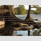 Family Tree Roots Background   1024 x 768 jpeg 286kB