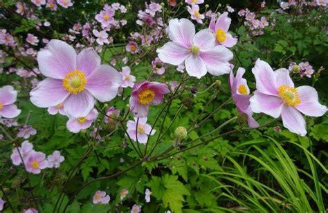 Botanischer Garten Oberholz by Startseite Botanischer Garten Oberholz Webseite
