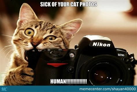 Sick Cat Meme - 25 most funniest memes about being sick images and pictures