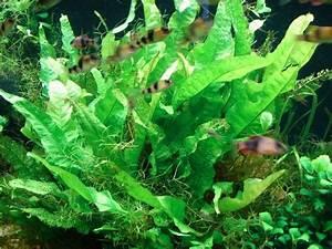 Aquarium Ohne Wasserwechsel : blaualgen ohne dunkelkur wegzubekommen aquarium forum ~ Eleganceandgraceweddings.com Haus und Dekorationen