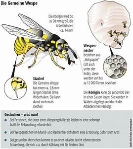 Was Wespen Nicht Mögen : wespen und bienen wer diese insekten t tet kann ordentlich zur kasse gebeten werden panorama ~ Markanthonyermac.com Haus und Dekorationen