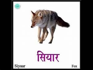 Forest wild animal best blog: Wild animals name in hindi