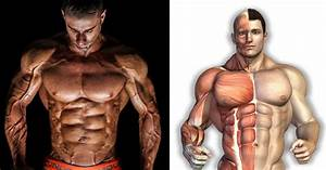 Conditions For Muscle Growth
