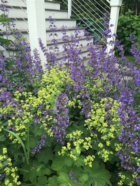 My Favorite Plant Combinations 25 (my Favorite Plant