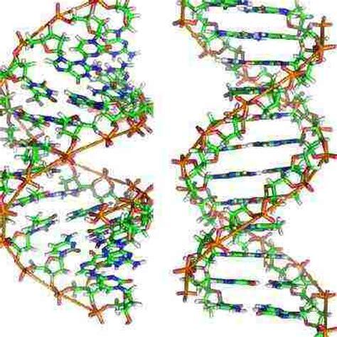 test genetica heran 231 a 233 tica e intelig 234 ncia