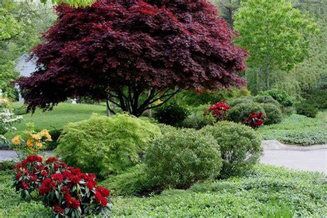 alberi da giardino piccolo alberi da giardino alcuni consigli e suggerimenti per lo