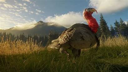 Ridge Wild Call Peaks Turkey Dlc Thehunter