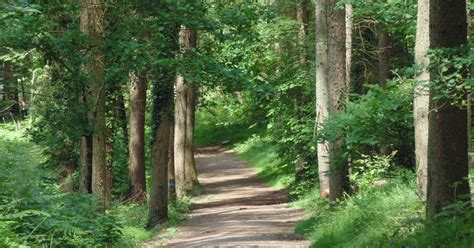 New Parking Charges For Visitors To The Forest Of Dean