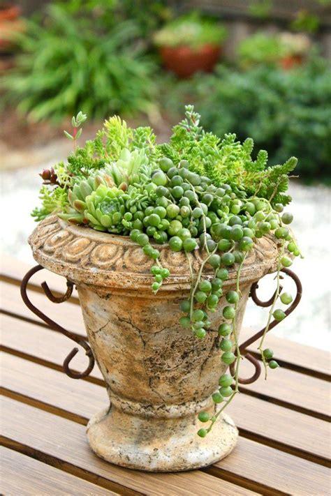 50 ไอเดียจัดสวน แต่งสวนด้วย ไม้อวบน้ำ Succulents - บ้าน ...