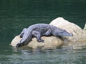 Reptiles & Amphibians | live knowledge world