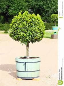 Arbre En Pot : petit arbre topiaire dans le pot image stock image 45160211 ~ Premium-room.com Idées de Décoration