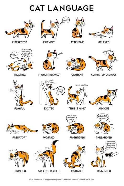 adorable illustrations    understand cats