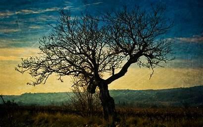 Tree Dark Desktop Wallpapers Pc Mac Close