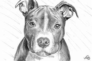 Pit Bull pup by FrostyGorillaz on DeviantArt
