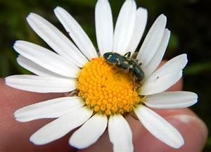 Week 8  Pollinators  U2013 Entomology 311 Lab Manual