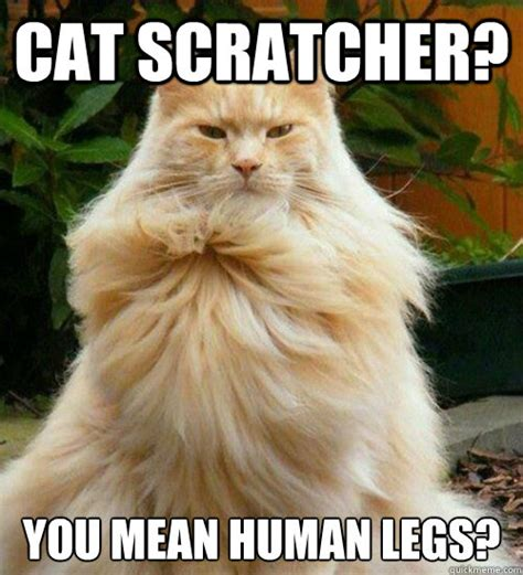 Mean Cat Memes - cat scratcher you mean human legs overly manly cat quickmeme