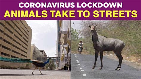 Coronavirus Outbreak: Animals Take To Streets Amid ...