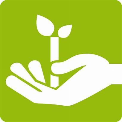 Gartenservice Pflege Gartengestaltung Linnepe