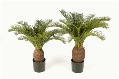cycas palme  cm kunstpflanzede