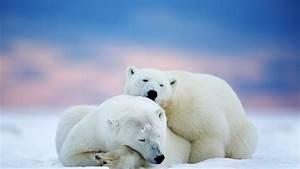 Winter Landscape HD Wallpapers Free Download