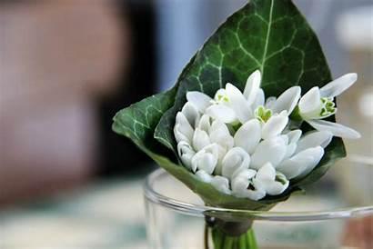 Winter Flowers Bouquet Narcissus Paperwhite