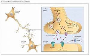 What Are Neurotransmitters