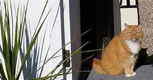 This Cat Photo Is Seriously Blowing Peoples' Minds